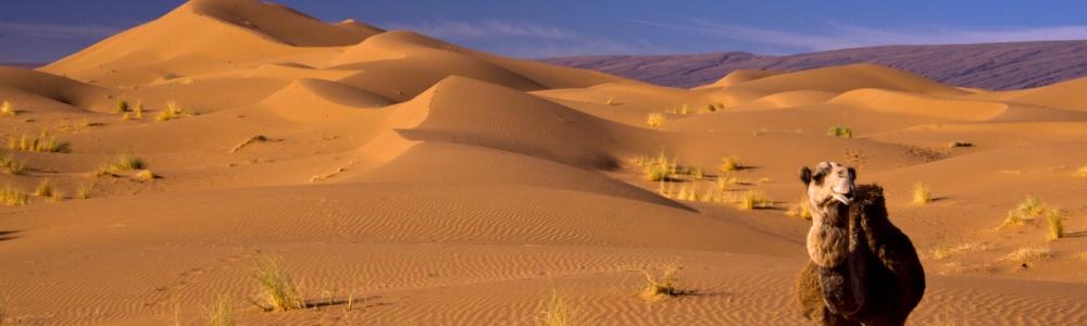 Mystik Wüste - Wege in die Stille