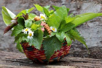Salat mit gesunden Frühlings -  Wildkräutern